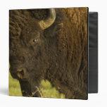 """Toro del bisonte en la gama nacional del bisonte, carpeta 1 1/2"""""""