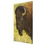 Toro del bisonte en la gama nacional del bisonte, impresion en lona