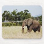 Toro del elefante africano tapetes de ratón