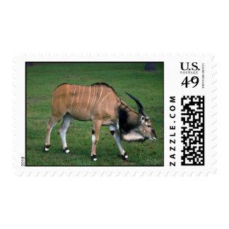 Toro Eland-joven del gigante/de señor Derby Sellos