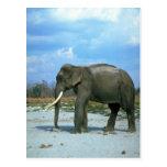 Toro Elefante-enorme indio Postal