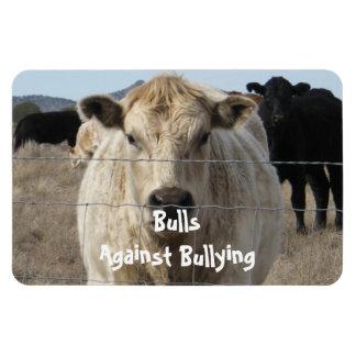 Toros contra - cercas - el Parenting del vaquero q Imanes De Vinilo