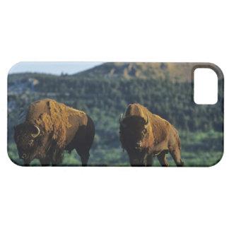 Toros del bisonte en el parque nacional de los iPhone 5 fundas