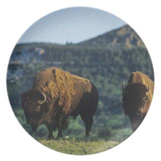 Toros del bisonte en el parque nacional de los lag plato
