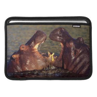 Toros del Hippopotamus Hippopotamus Amphibius Fundas Para Macbook Air