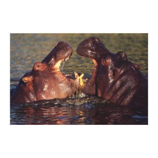 Toros del Hippopotamus (Hippopotamus Amphibius) Impresiones De Lienzo