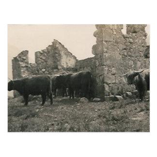 toros en las ruinas tarjetas postales