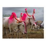 Toros en un mercado de ganado en la India rural Tarjeta Postal