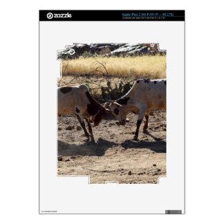 Toros que luchan pegatina skin para iPad 3