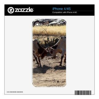 Toros que luchan skin para el iPhone 4S