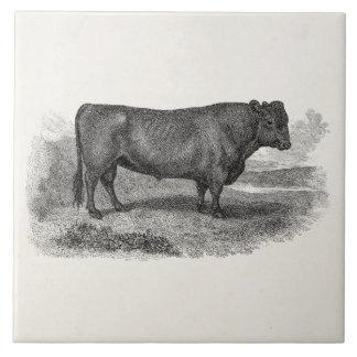 Toros retros de la vaca del ejemplo de Bull de los Azulejo Cuadrado Grande