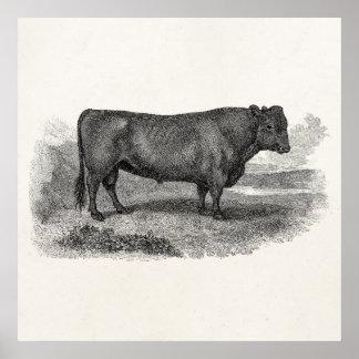 Toros retros de la vaca del ejemplo de Bull de los Posters