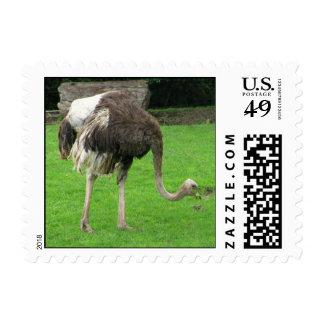 Torpe el sello de la avestruz