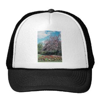 Torre Gardens, Torquay, Devon, England  flowers Trucker Hat