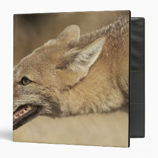Torres del Paine, Chile. Patagonian Gray Fox, 3 Ring Binder