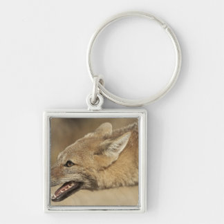 Torres del Paine, Chile. Patagonian Gray Fox, Keychain