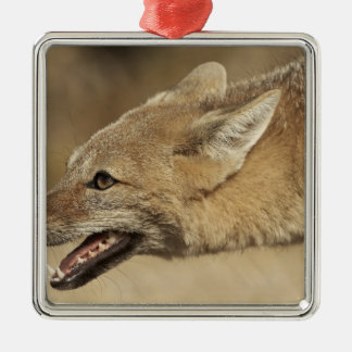 Torres del Paine, Chile. Patagonian Gray Fox, Metal Ornament