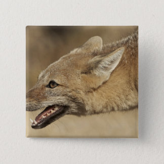 Torres del Paine, Chile. Patagonian Gray Fox, Pinback Button