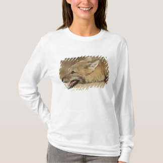 Torres del Paine, Chile. Patagonian Gray Fox, T-Shirt
