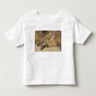 Torres del Paine, Chile. Patagonian Gray Fox, Toddler T-shirt