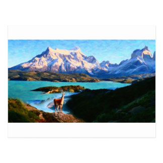Torres del Paine National Park and the Llama, Chil Postcard