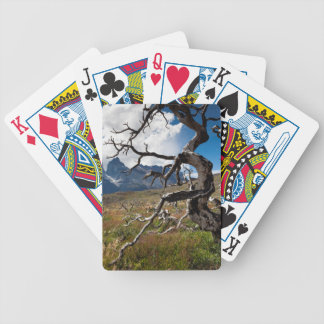 Torres del Paine National Park, fire damaged trees Bicycle Playing Cards