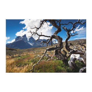 Torres del Paine National Park, fire damaged trees Canvas Print