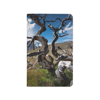Torres del Paine National Park, fire damaged trees Journal