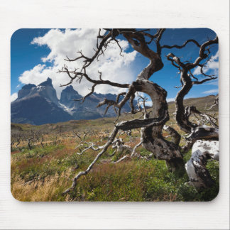 Torres del Paine National Park, fire damaged trees Mouse Pad