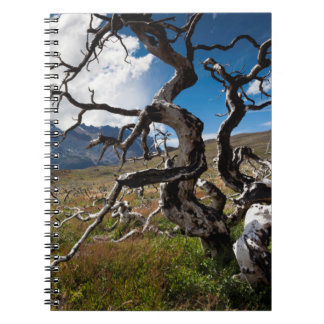 Torres del Paine National Park, fire damaged trees Notebook