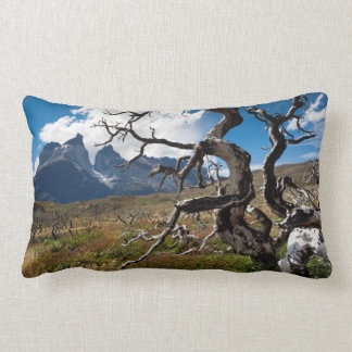 Torres del Paine National Park, fire damaged trees Pillow