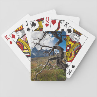 Torres del Paine National Park, fire damaged trees Poker Cards