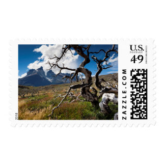 Torres del Paine National Park, fire damaged trees Stamps
