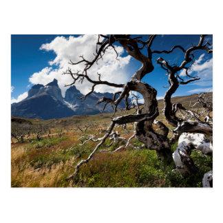 Torres del Paine National Park, fire damaged trees Postcard