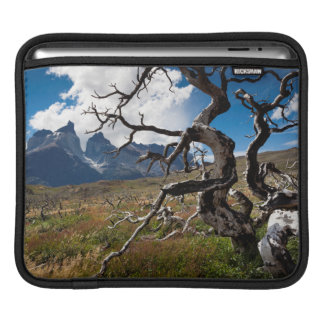 Torres del Paine National Park, fire damaged trees Sleeve For iPads