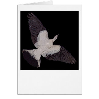 Torresian Imperial Pigeon flying card