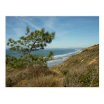 Torrey Pine and California Coastline Landscape Postcard