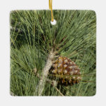 Torrey Pine Closeup California Tree Ceramic Ornament