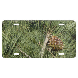 Torrey Pine Closeup California Tree License Plate