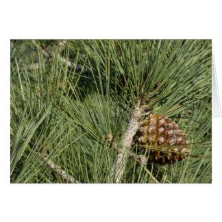 Torrey Pine Closeup Card