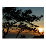 Torrey Pine Sunset I California Landscape Postcard