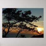 Torrey Pine Sunset I California Landscape Poster