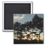 Torrey Pine Sunset II California Landscape 2 Inch Square Magnet