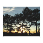 Torrey Pine Sunset II California Landscape Canvas Print