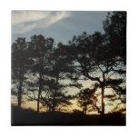Torrey Pine Sunset II California Landscape Ceramic Tile