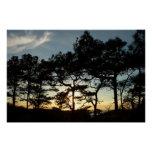 Torrey Pine Sunset II California Landscape Perfect Poster