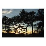 Torrey Pine Sunset II California Landscape Photo Print