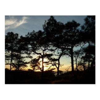 Torrey Pine Sunset II California Landscape Postcard