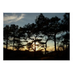 Torrey Pine Sunset II California Landscape Poster