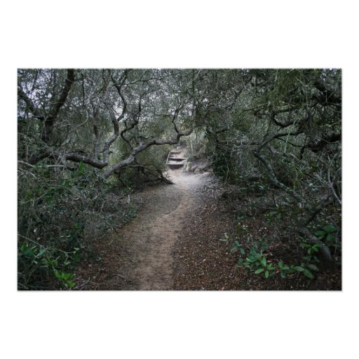 Torrey Pines Trail Poster